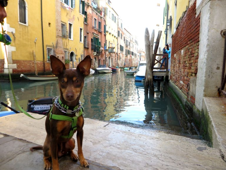 Sebastian the RV adventure dog discovering Venice