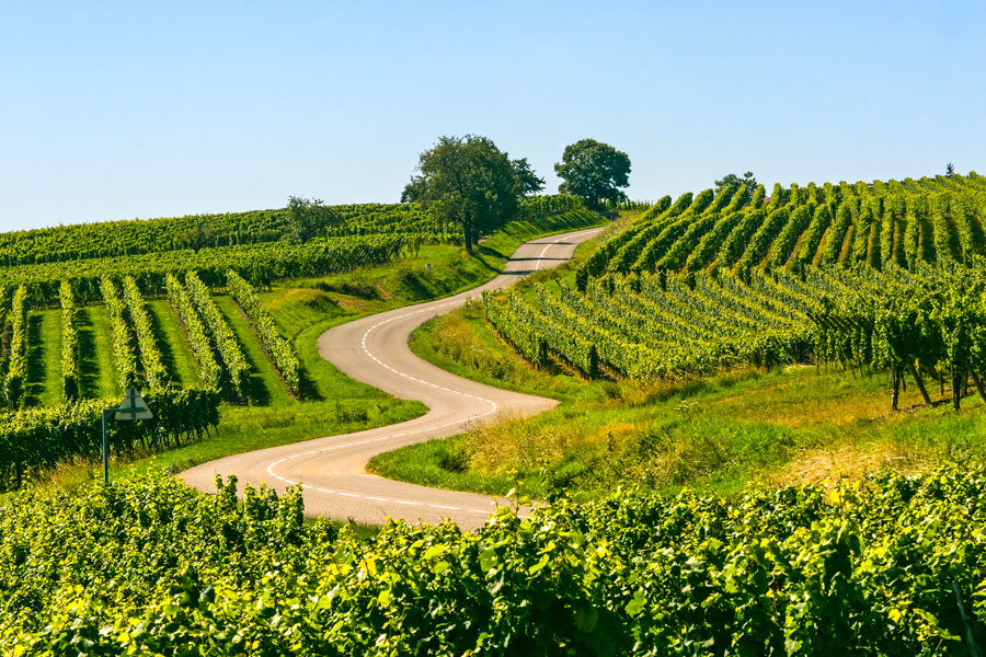 Plan a campervan trip through the vineyards of France, there are many to choose from.